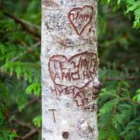 А не приятно удивит поврежденными деревьями: здесь такое встречается в сотни раз чаще чем в самом запущенном парке в Канаде, сразу видно вторую поправку к Конституции в действии — свободное ношение оружия, в т.ч. холодного.