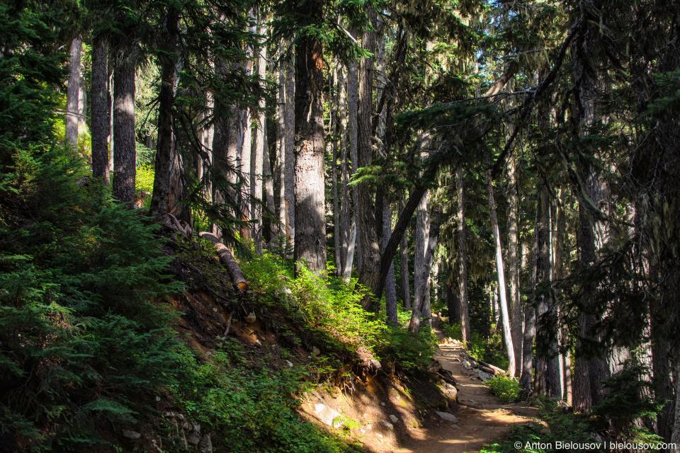 Тропа через лес к Garibaldi Lake