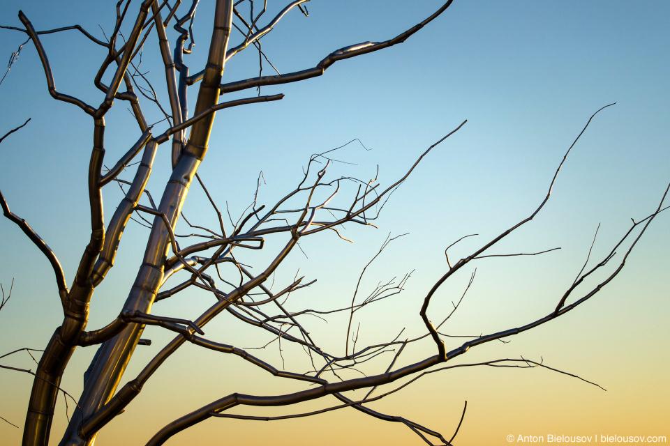 """""""Split"""" — a metal tree in Olympic Sculpture Park (Seattle, WA)"""