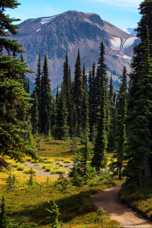 Taylor Meadows trail