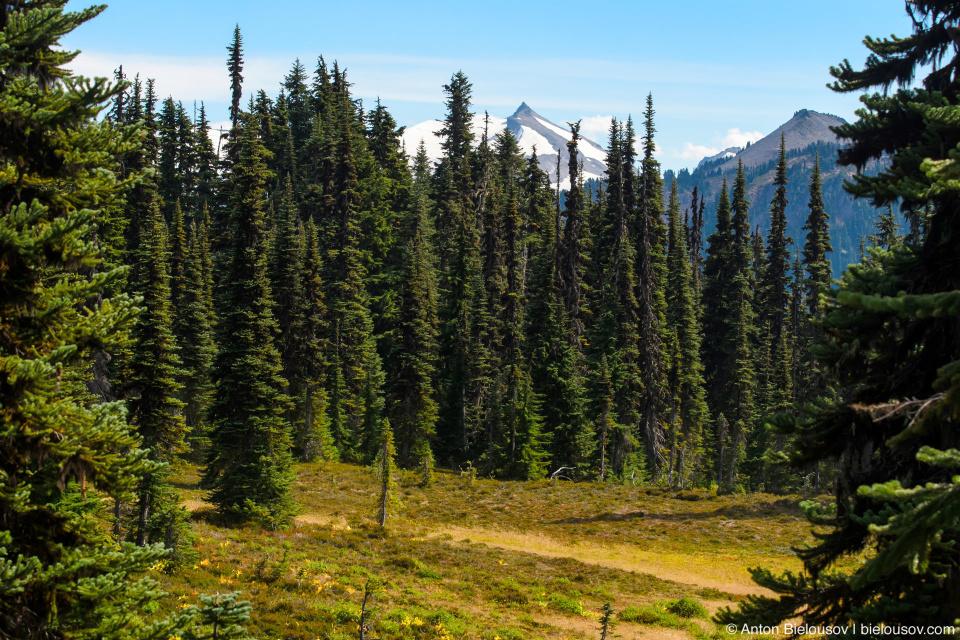Taylor Meadows trail: Вид на горы сзади заставляет оборачиваться каждые несколько секунд.
