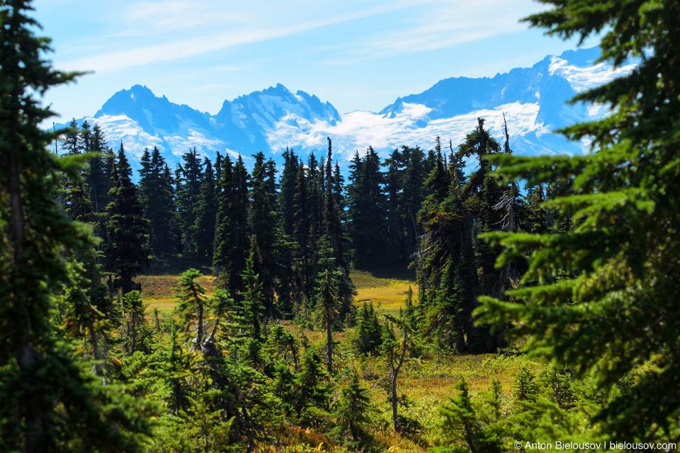 Taylor Meadows trail: Вид на горы и ледники сзади заставляют оборачиваться каждые несколько секунд.