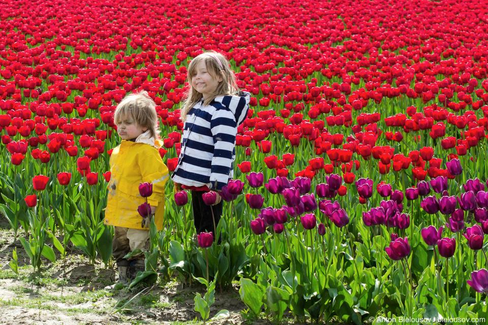 Дети на тюльпановых полях RoozenGaarde: Фестиваль тюльпанов (Skagit Valley, Mount Vernon, WA)