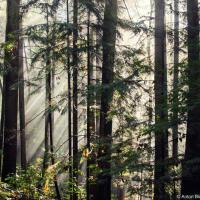 Пройтись по лесу рано утро когда никого вокруг — это непередаваемо.