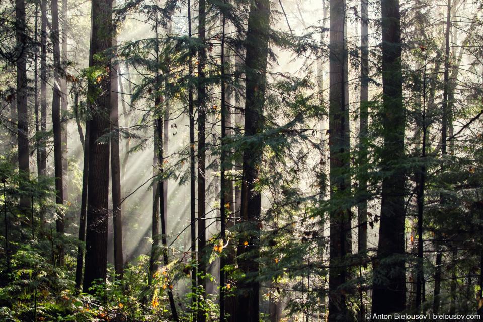 Утро в лесу