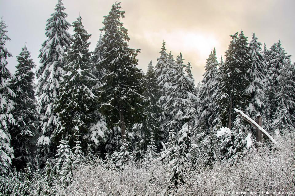 Утро в зимнем лесу