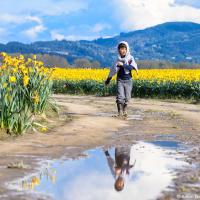 На сайте фестиваля есть обновляемая карта полей — где что цветет, а где отцвело. Нарциссы, например, уже увяли.