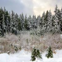 Чтобы весь день не занимать, решил встретить расcвет в горах.  Да вот незадача, вчера в Ванкувере была гроза да с градом, поэтому в горах сейчас как-то так.