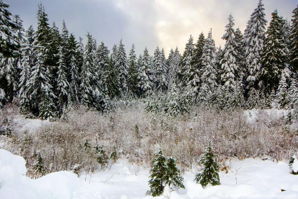 Снежное утро на горе Mount Seymour