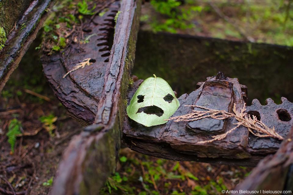 Face carved in leaf