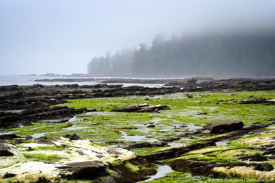 West Coast Trail Beach