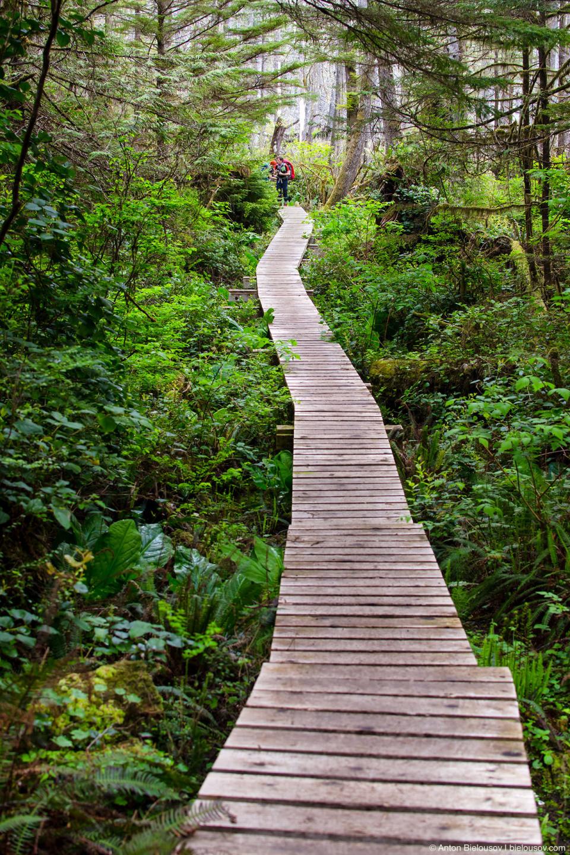 West Coast Trail new board walk