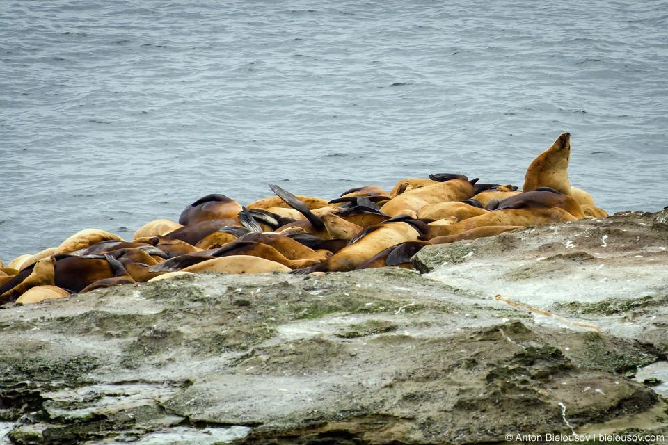West Coast Trail Pacheta Point Sea Lions Haull
