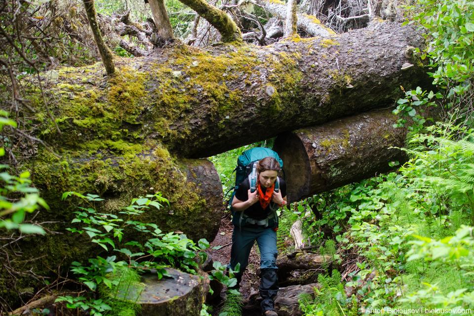 В завалееных деревьях приходится вырезать проходы по форме рюкзака.