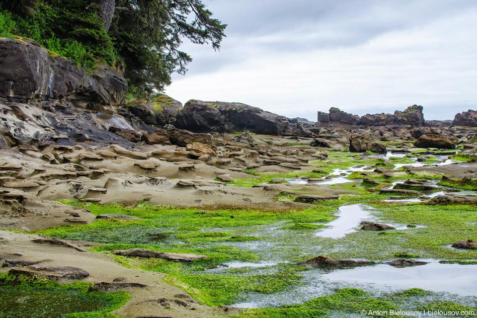 Carmanah Point, West Coast trail
