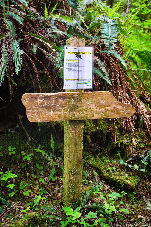 Знак, предупреждающий о пумах (кугуарах)