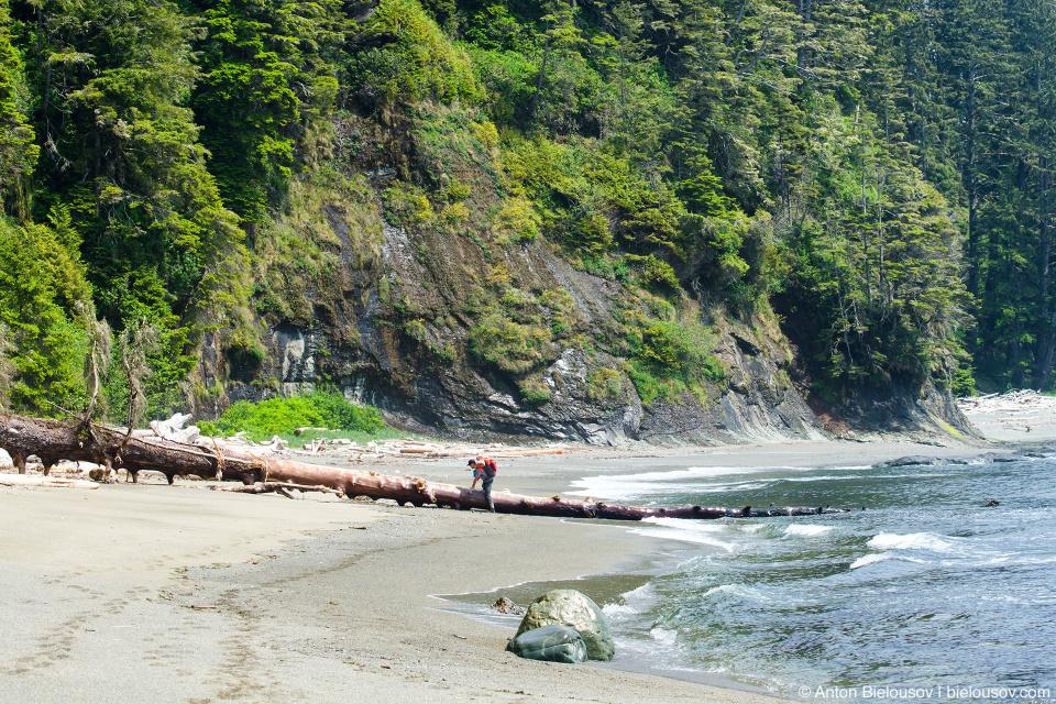 West Coast Trail Driftwood