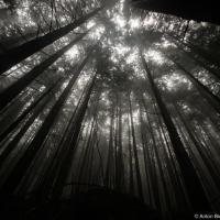 Лес здесь уже совсем другой — он как бы морально готовит к возвращению в Ванкувер.