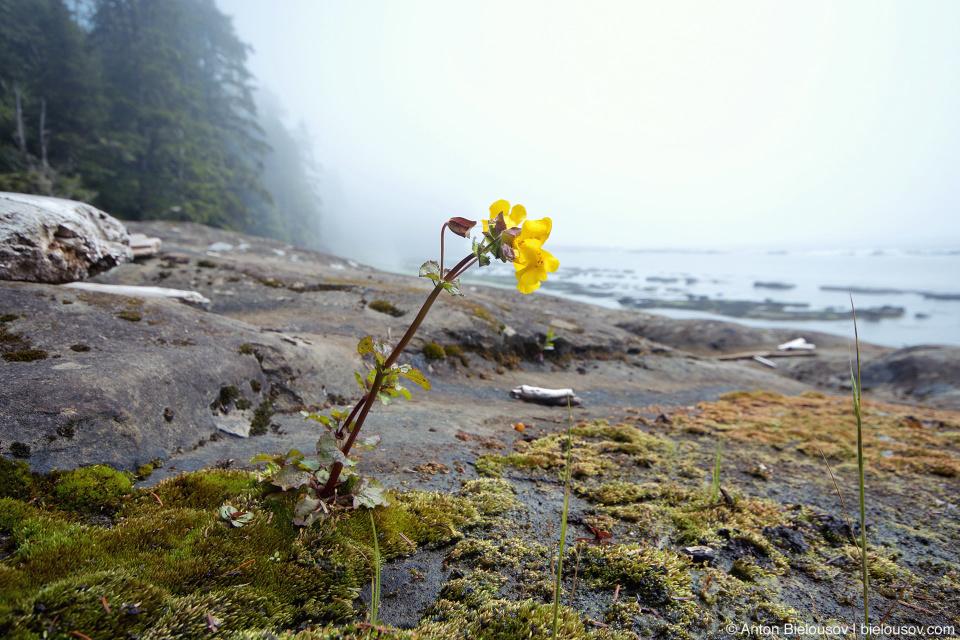 Цветок на пляже