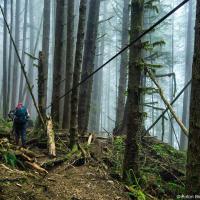Наверху тропа тоже больше похожа на Baden Powel в Ванкувере (по иронии, она проходит как раз через начало Грауз Грайнда) чем на остальной трейл. Поэтому если вы начинаете с обратной стороны, не спешите судить и WCT по первым километрам. Здесь на 71 км — самая высокая точка на всем маршруте — всего 180 м.
