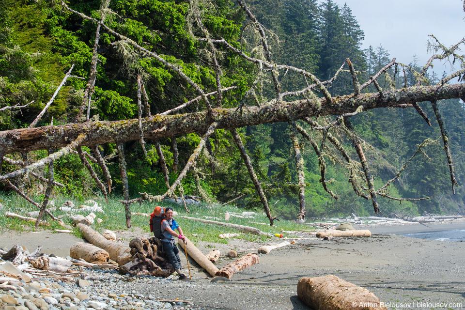West Coast Trail Log