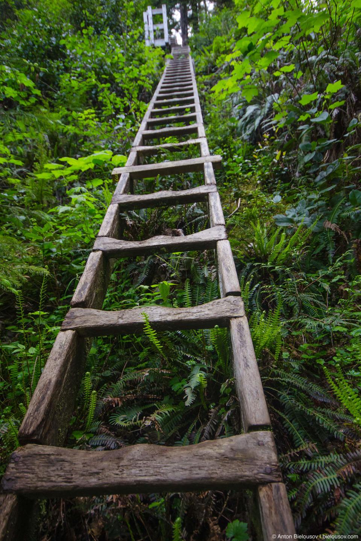 West Coast Trail: Cullite Creek ladders