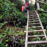 И снова старые знакомые — лестницы.