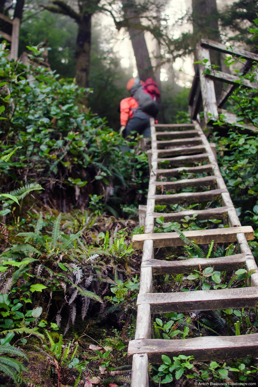 Лестницы на West Coast Trail