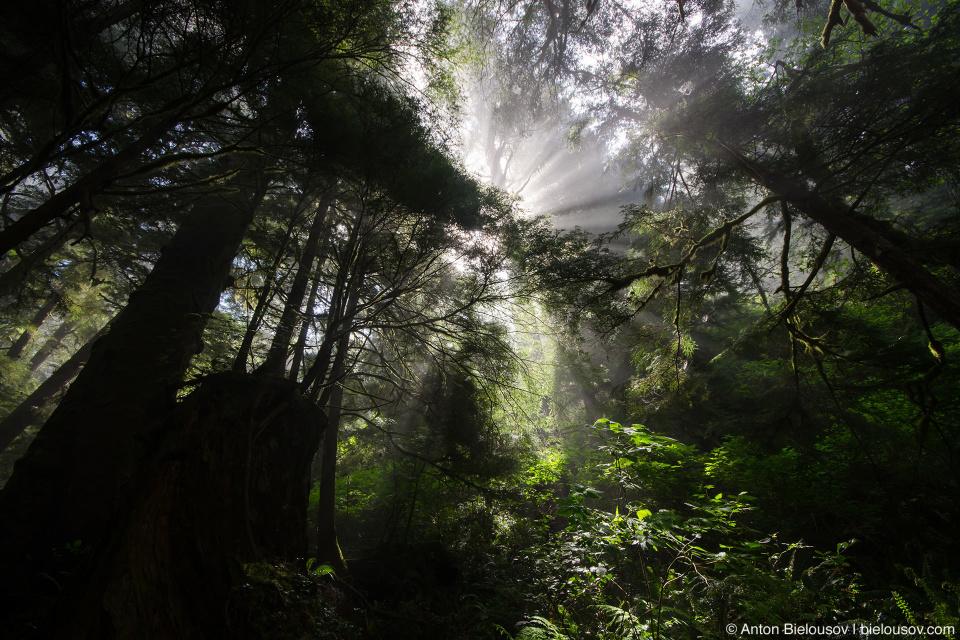 Утренние солнечные лучи в лесу