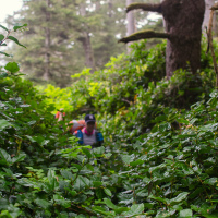 Здесь я ощутил себя не просто в дождливом лесу а в настоящих джунглях — от влажности запотело все — очки, камера. Воздух кажется осязаемым — как когда заходишь в воссозданную тропическую экосистему в каком-нибудь зоопарке. Со всех сторон капает вперемешку роса и пот. За шиворот сыпется не пойми что. паутину с лица уже даже перестал снимать. Тропинку еще можно разобрать, но через кусты уже приходится просто ломиться.