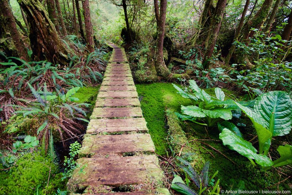 Помост через болото на тропе West Coast Trail