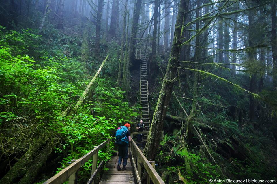 Лестницы на Trasher Cove (West Coast Trail, 70km)