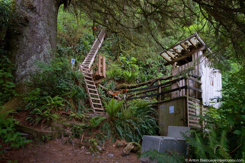 Trasher Cove campsite restroom (West Coast Trail, 70km)