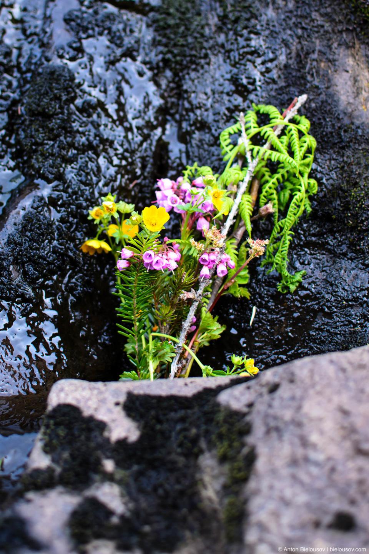 Букет полевых альпийских цветов