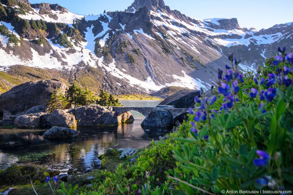 Bagley Lake alpine meadows, Mount Baker
