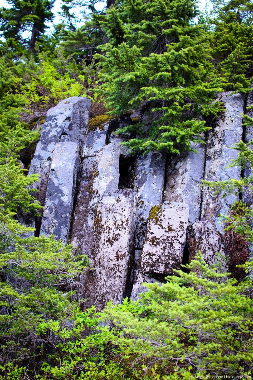 Андезит — шестигранные образования вулканиеской породы на склоне горы Baker Mountain
