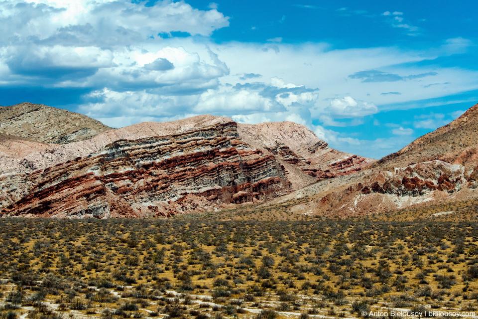 Калифорнийская пустыня