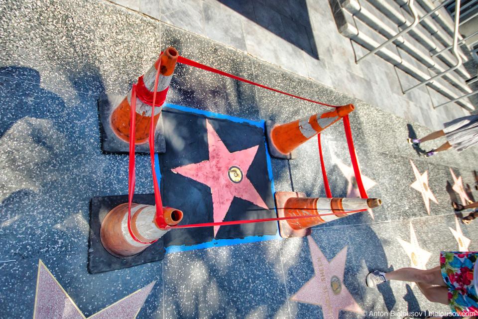 Каждый год устанавливается 20—30 новых звезд из порядка 200 номинантов, обычно одна из них — посмертно, но при условии что номинант скончался не более 5 лет назад.