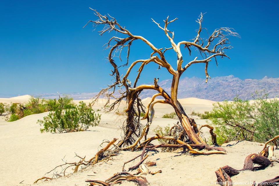 Сухое дерево в Долине Смерти
