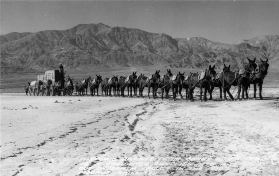 Twenty-mule borax team wagons, Death Valley, CA