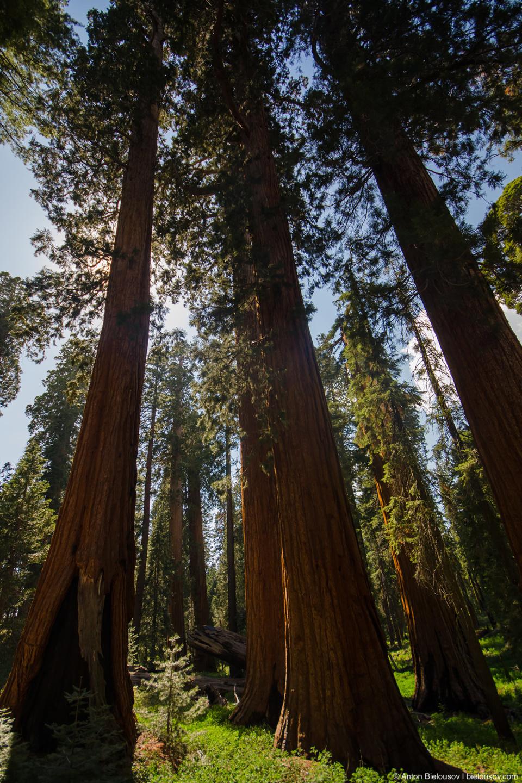 Коттедж в роще Mariposa Grove, Yosemite National Park, CA