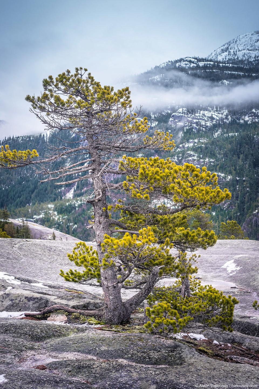 Немножко фоткаем скрюченные альпийские бонсаи, растущие из камней, играем в снежки — и снова вниз.