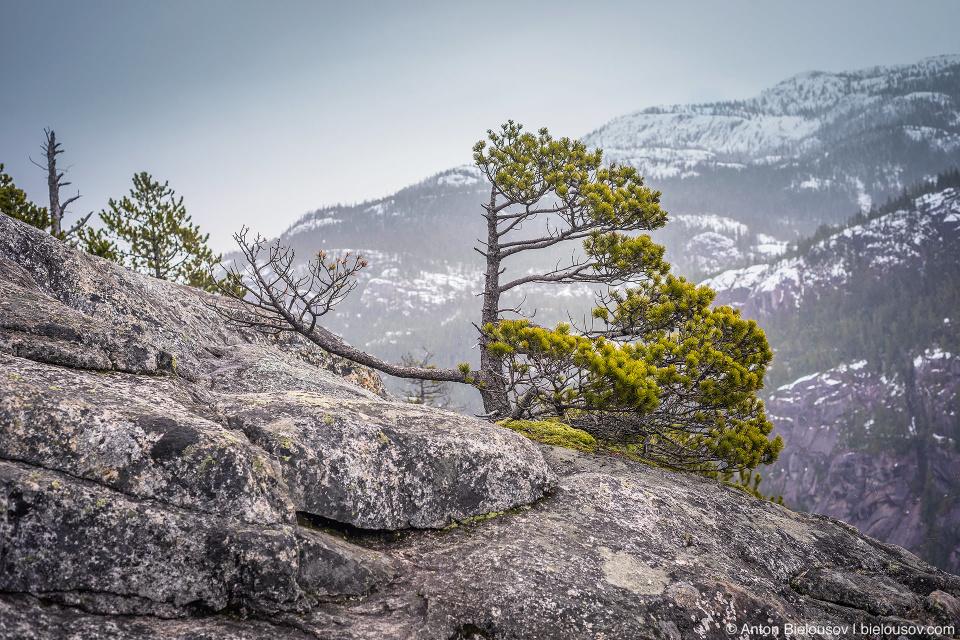 Stawamus Chief First Peak