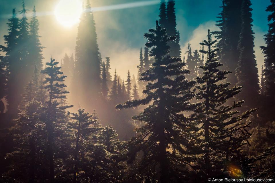 Рассвет на тропе в провинциальном парке Гарибальди