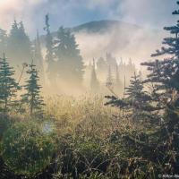 Во-первых, утром природу совершенно не узнать — даже если уже бывал здесь прежде, на рассвете кажется что попал совершенно в иной мир.