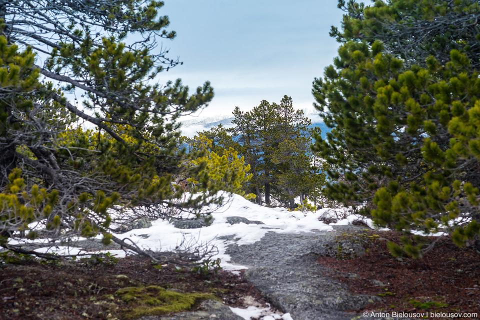 Stawamus Chief Third Peak (702 m)