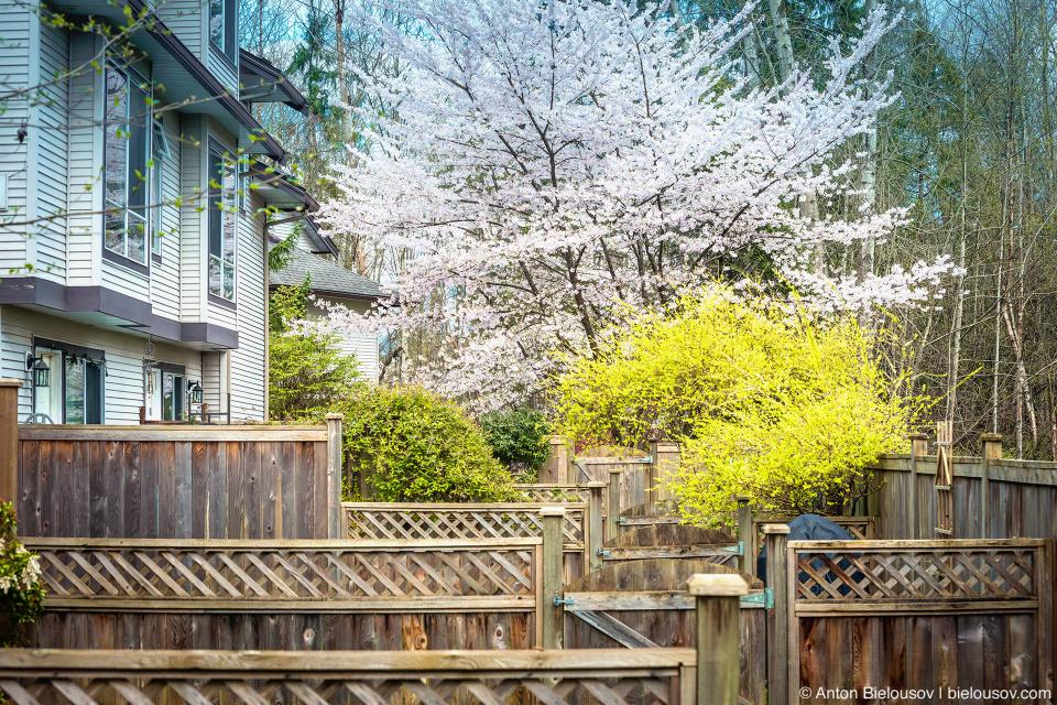 Вид с нашего заднего двора