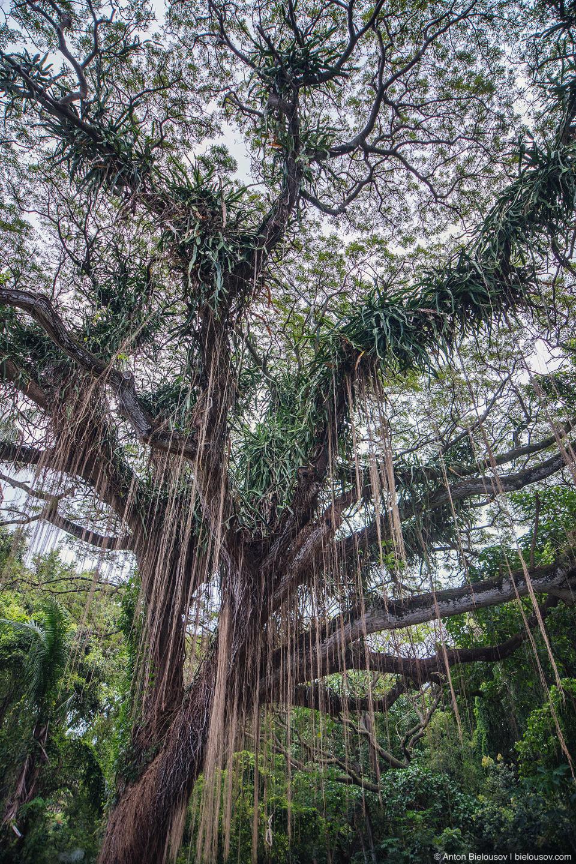 Honolua Bay Access trail (Maui, HI)