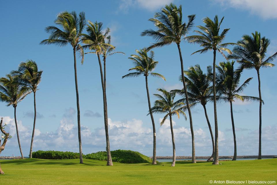 Beach resort in Kahului (Maui, HI)