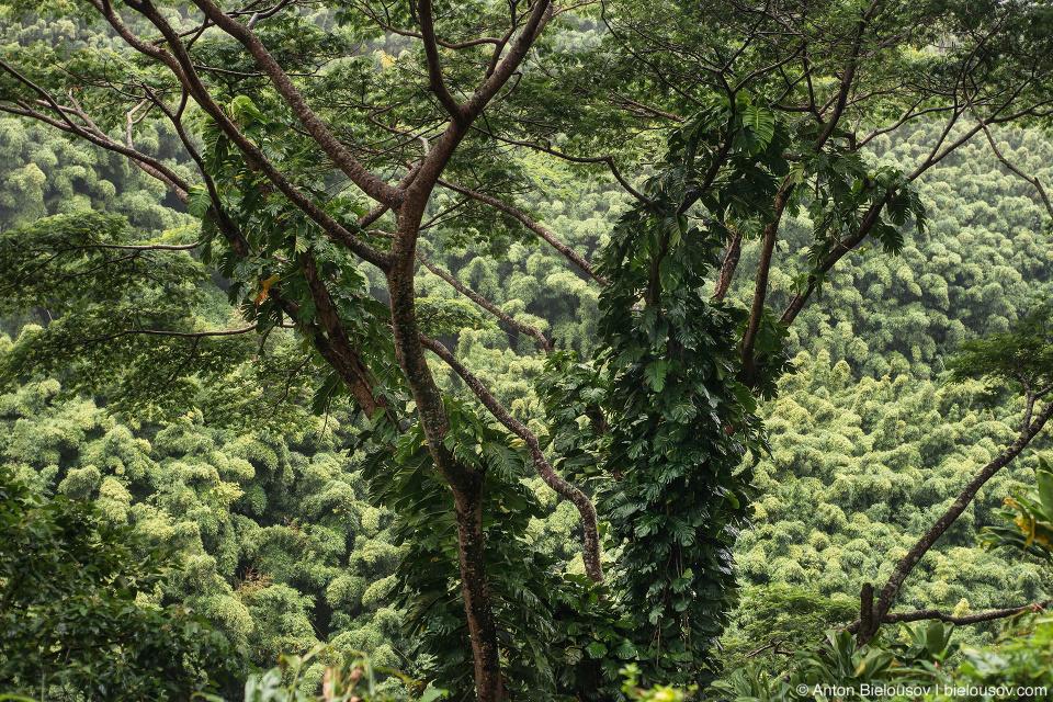 Na'ili'ili-Haele Falls trail view (Maui, HI)